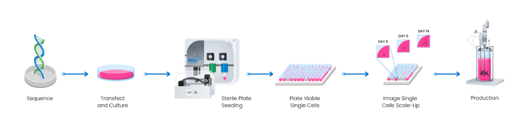An illustration of the workflow of cell line development using the WOLF microfluidic sorter.