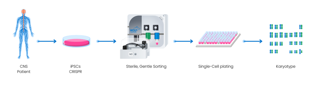 An illustration of the workflow of CRISPR gene editing using the WOLF microfluidic sorter.